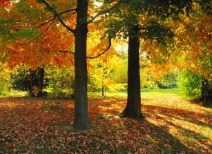 herfst in huis halen