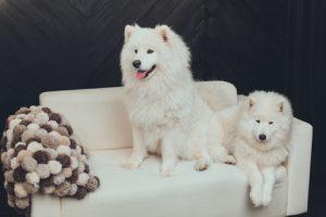 Honden bank